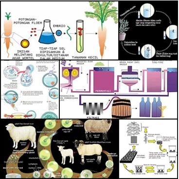 Produk Bioteknologi Konvensional Modern My World